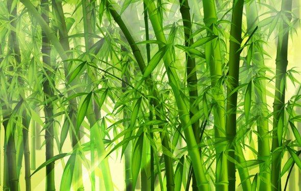 Бамбук и лотос по фен-шуй